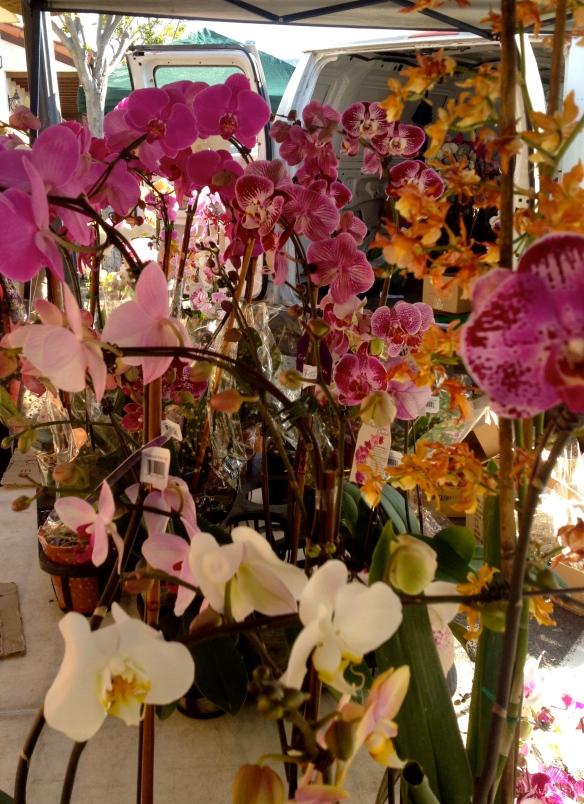 orchidman